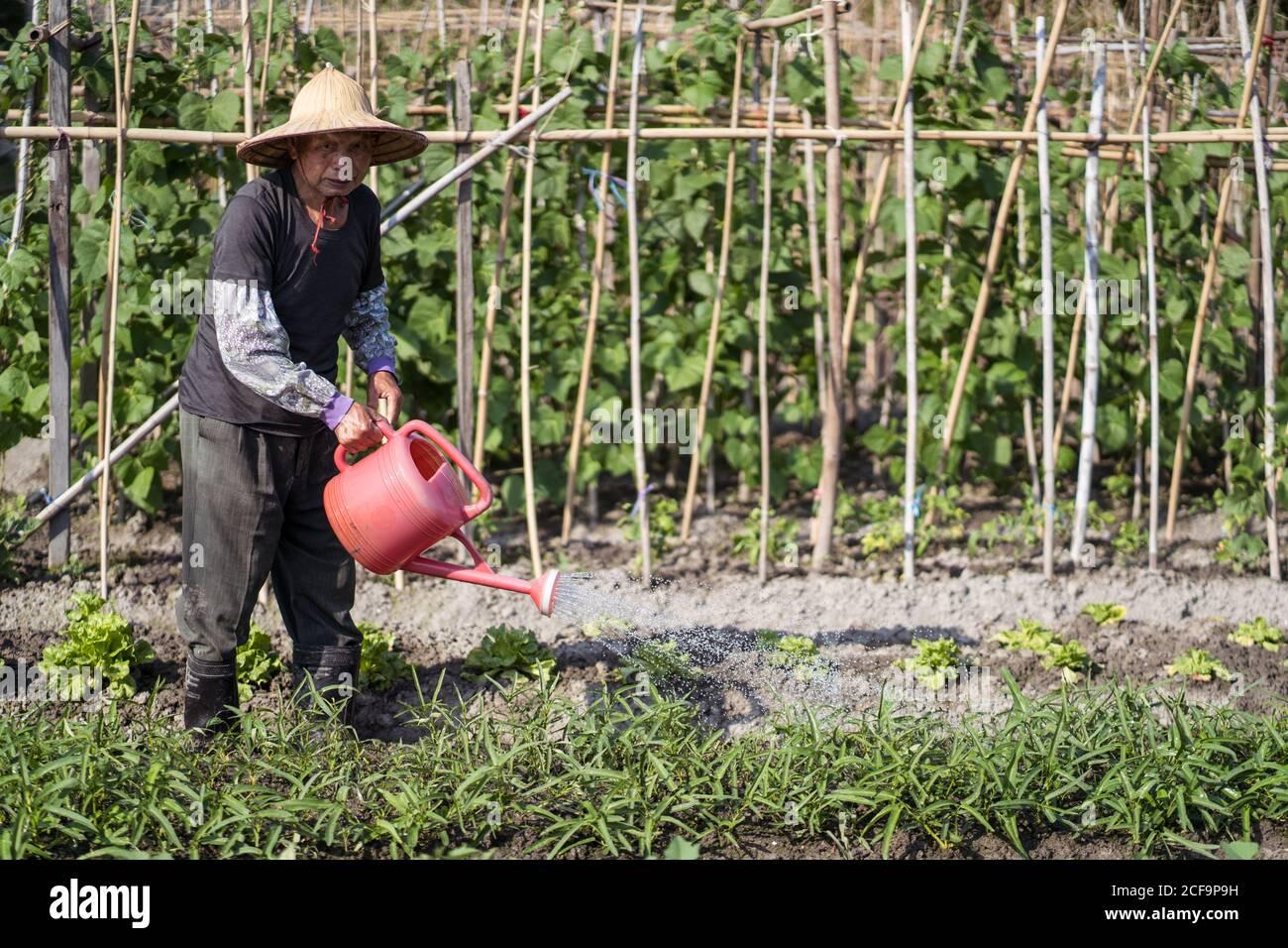 Homme asiatique d'âge moyen plein corps en paille orientale traditionnelle chapeau regardant l'appareil photo et utilisant le pot d'arrosage pendant le versement Plantes vertes poussant dans le jardin à Taïwan Banque D'Images