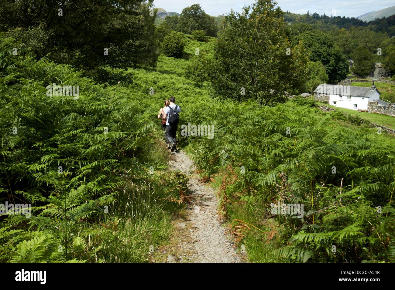 jeune couple marchant le long du sentier à travers de grandes fougères dans le loughrigg lake district parc national cumbria angleterre royaume-uni Banque D'Images