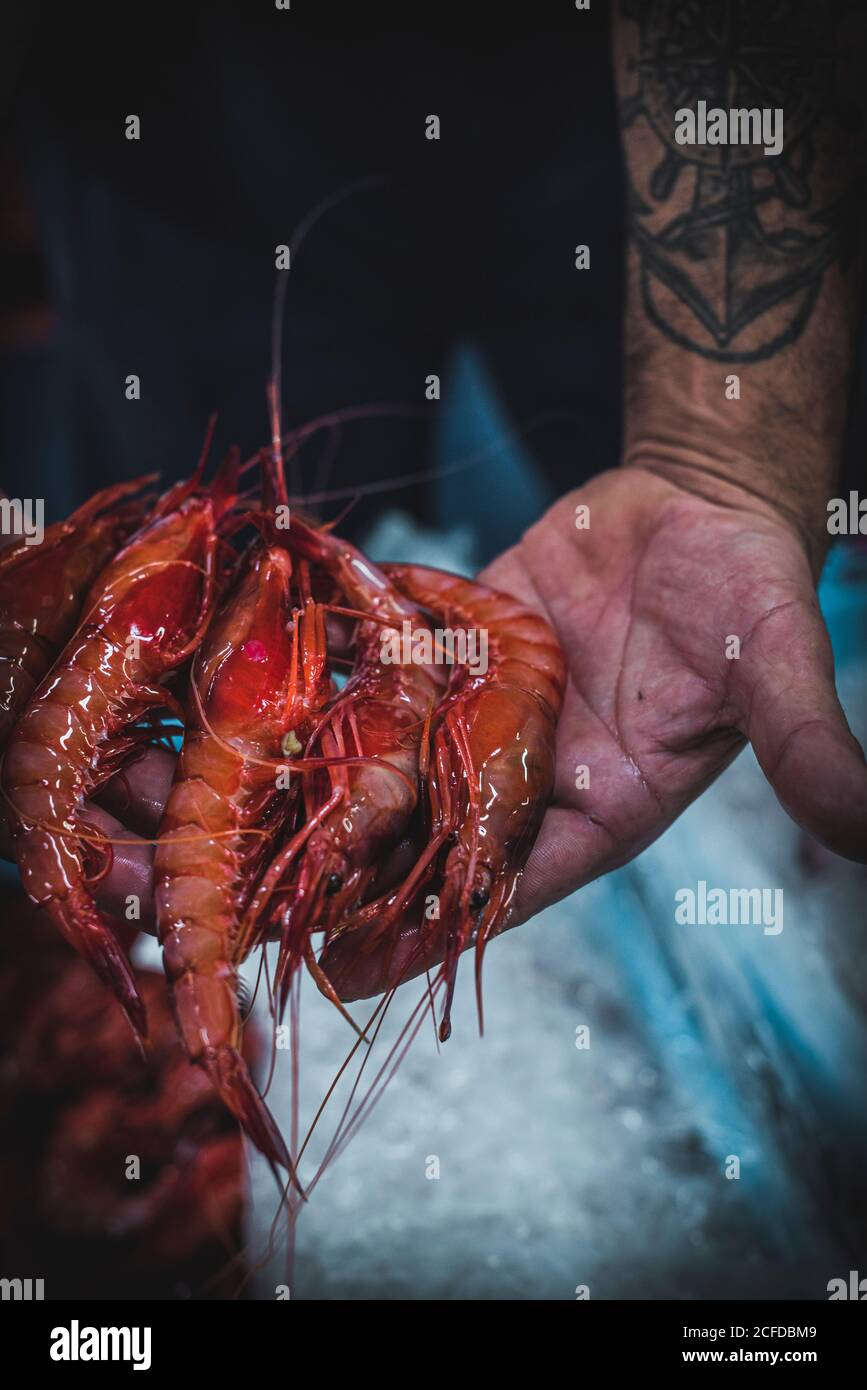 Rognez les mains d'homme anonyme en montrant des crevettes fraîches rouges Banque D'Images