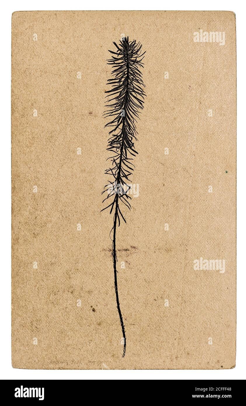 Texture de papier recyclé avec silhouette de plante. Fond en carton Kraft Banque D'Images