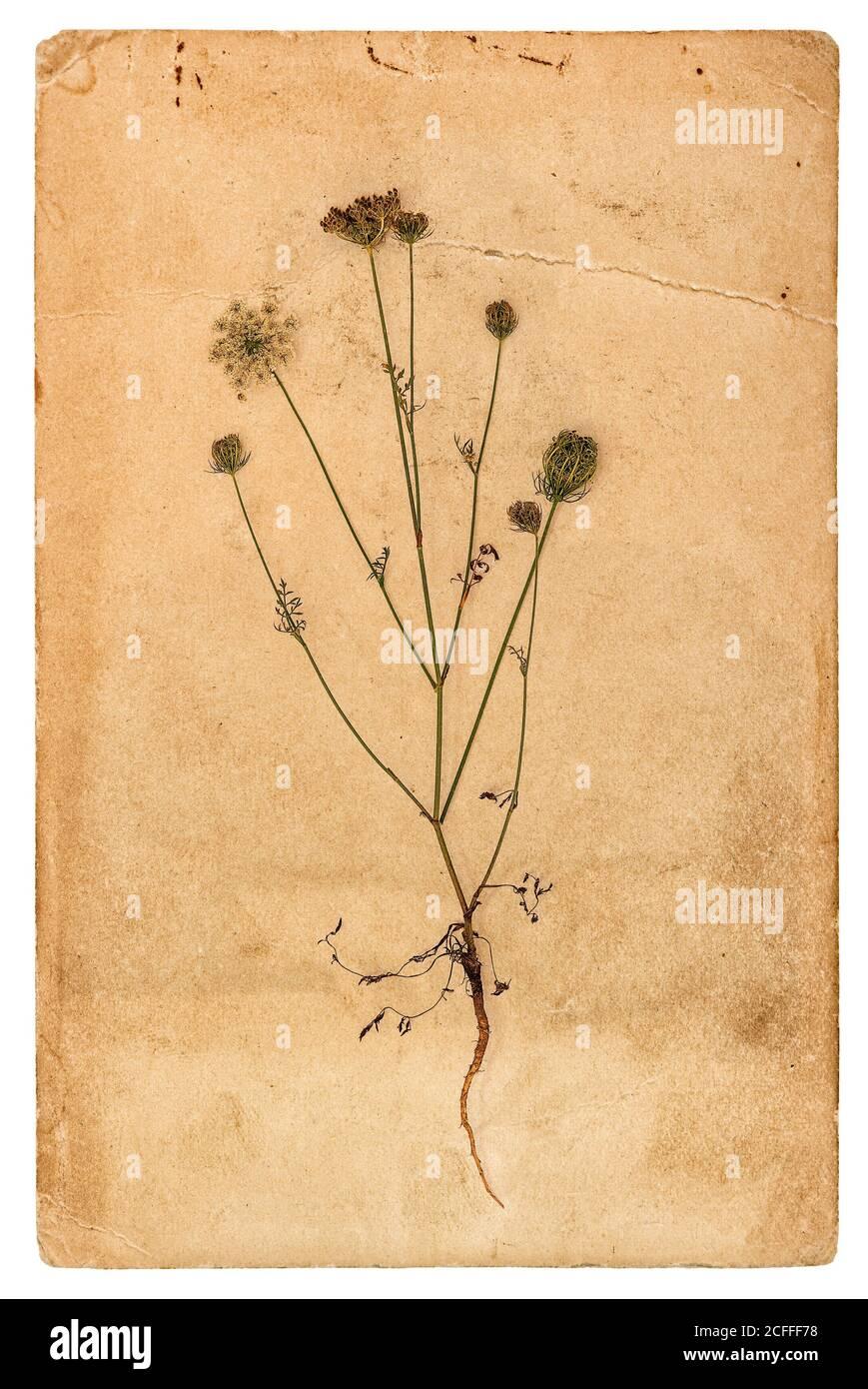 Page papier utilisée avec herbier végétal sur fond blanc Banque D'Images