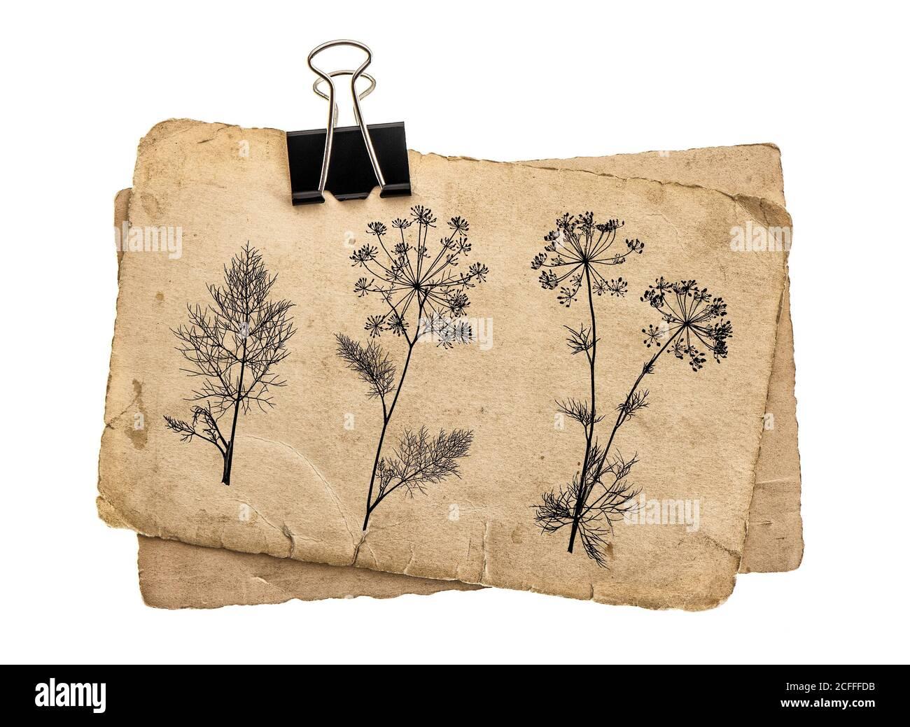 Anciennes feuilles de papier avec clip vintage. Dessin floral texture carton grundy Banque D'Images