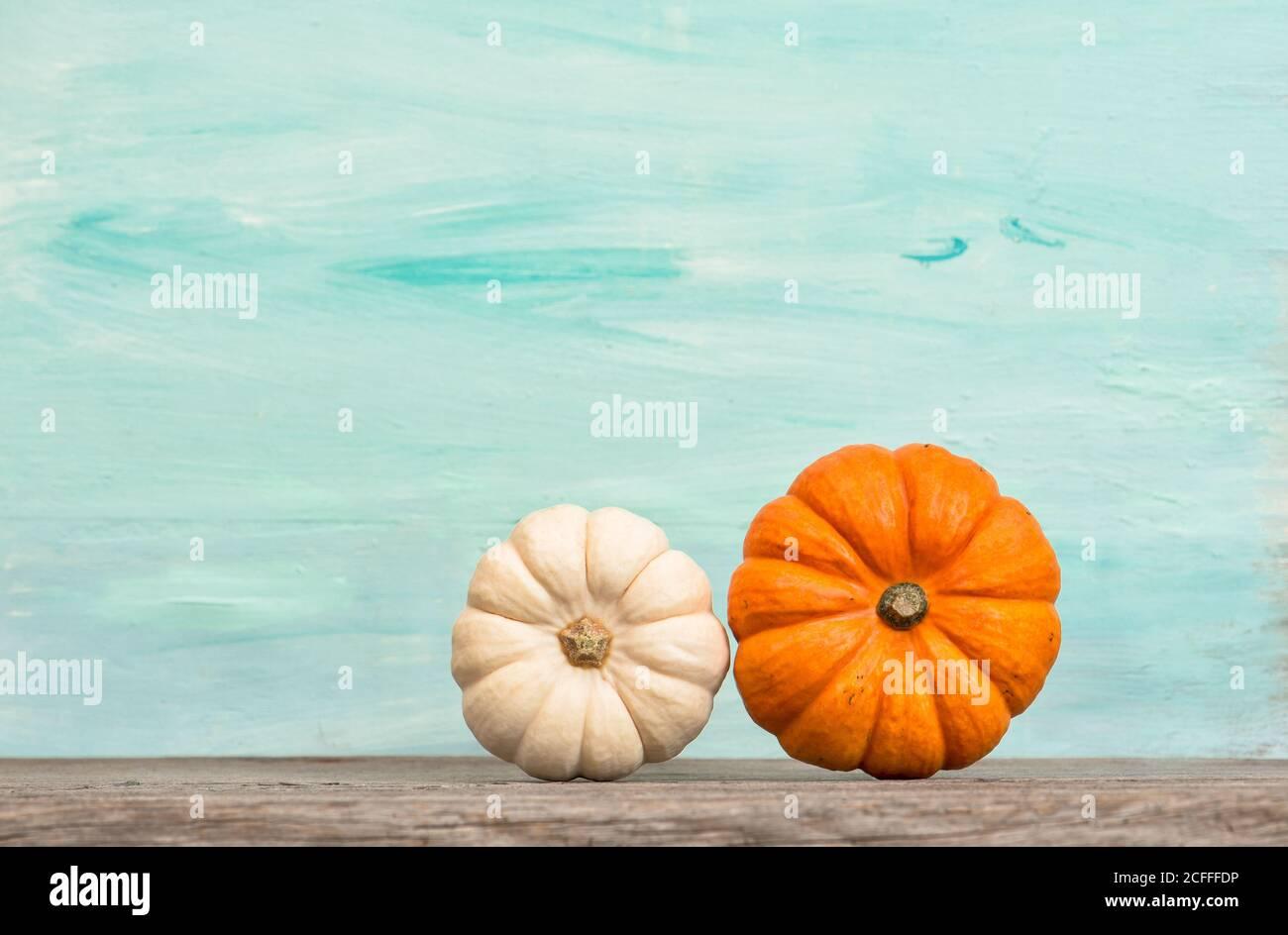 Thanksgiving. Automne. Halloween. Décoration citrouille sur fond bleu turquoise Banque D'Images