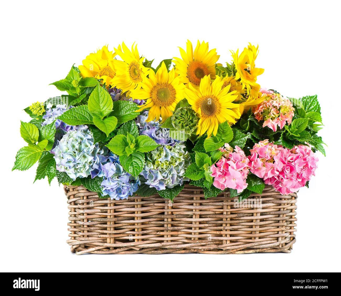 Tournesols et fleurs d'hortensia isolées sur fond blanc Banque D'Images