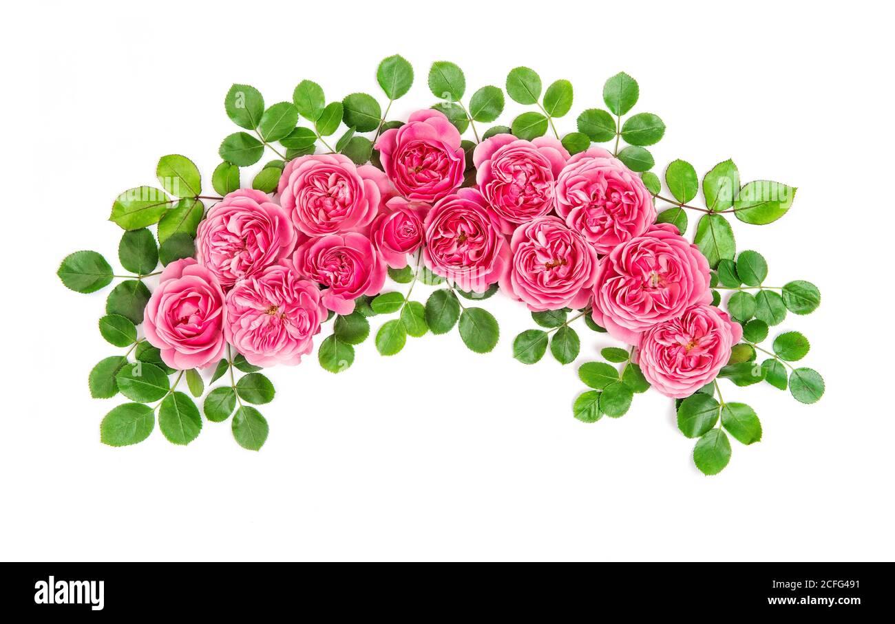 Roses roses fleurs arc isolé sur fond blanc. Plat floral botanique Banque D'Images