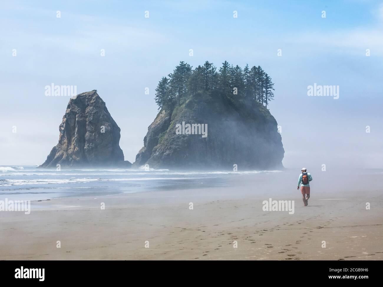 Un homme randonnée le long de 2nd Beach, Parc National Olympique Coastal Preserve, État de Washington, Etats-Unis. Banque D'Images
