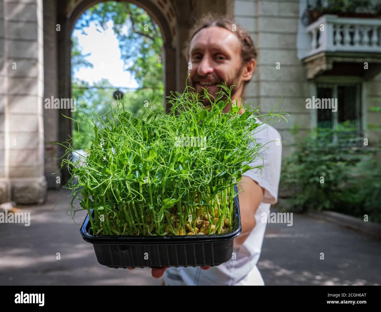 Le gars offre des microverts. Un gars joyeux pousse un récipient avec des microverts frais de pousses de pois Banque D'Images