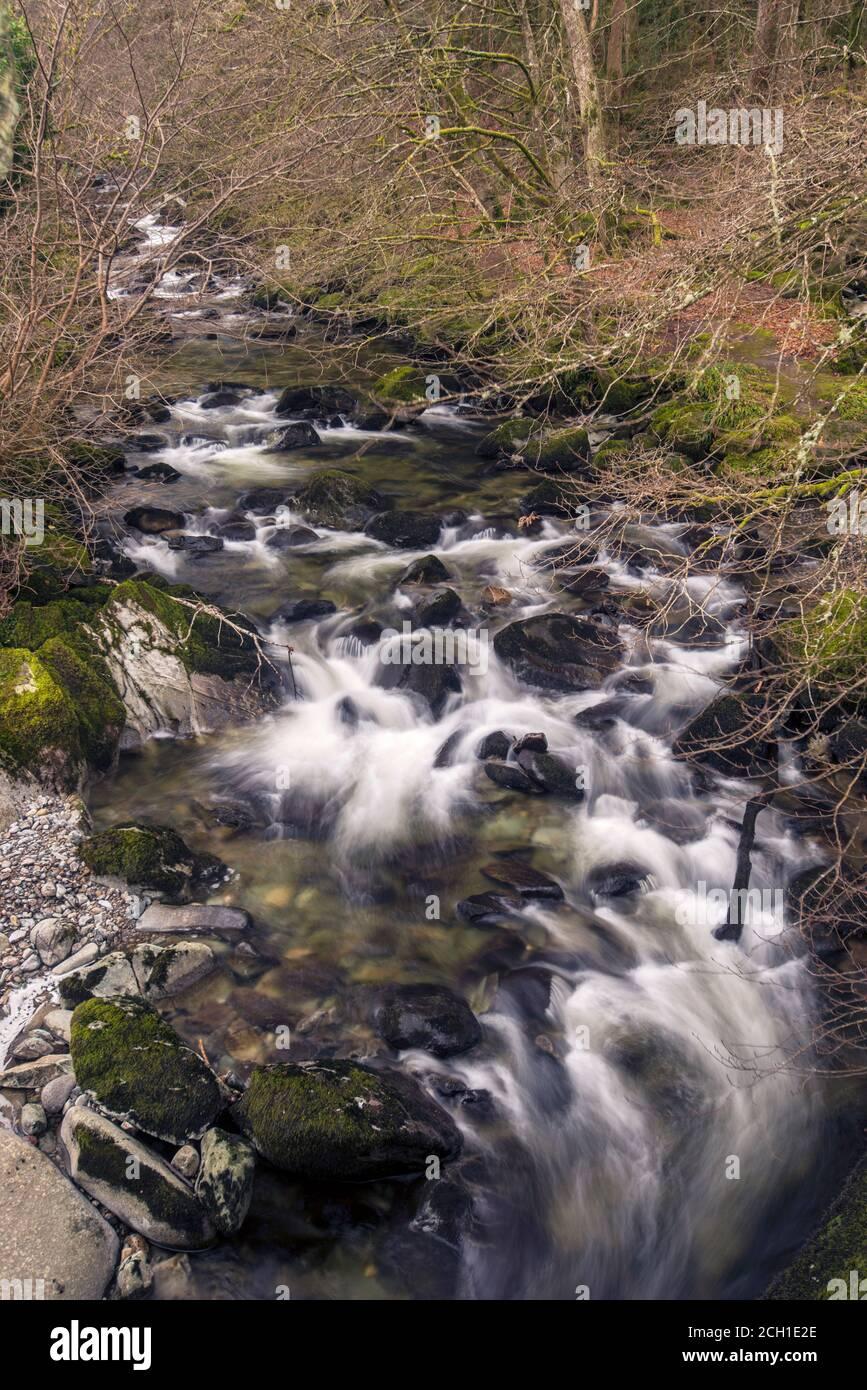 Le Torrent à pied le long de la rivière Clywedog, Dolgellau, Galles. Banque D'Images