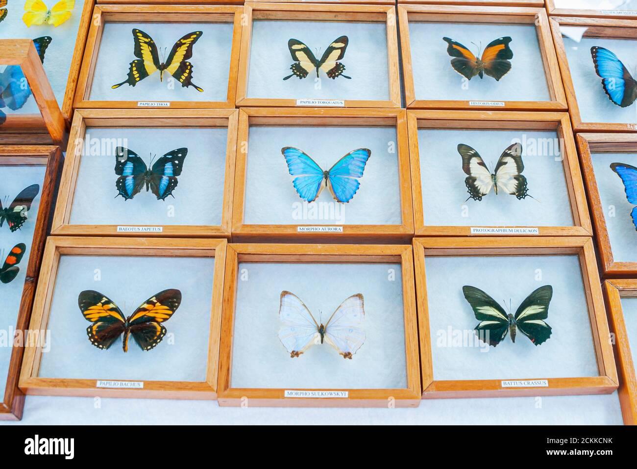 Florida Miami Beach papillons Amérique du Sud américain à vendre, marché aux puces marché, Banque D'Images
