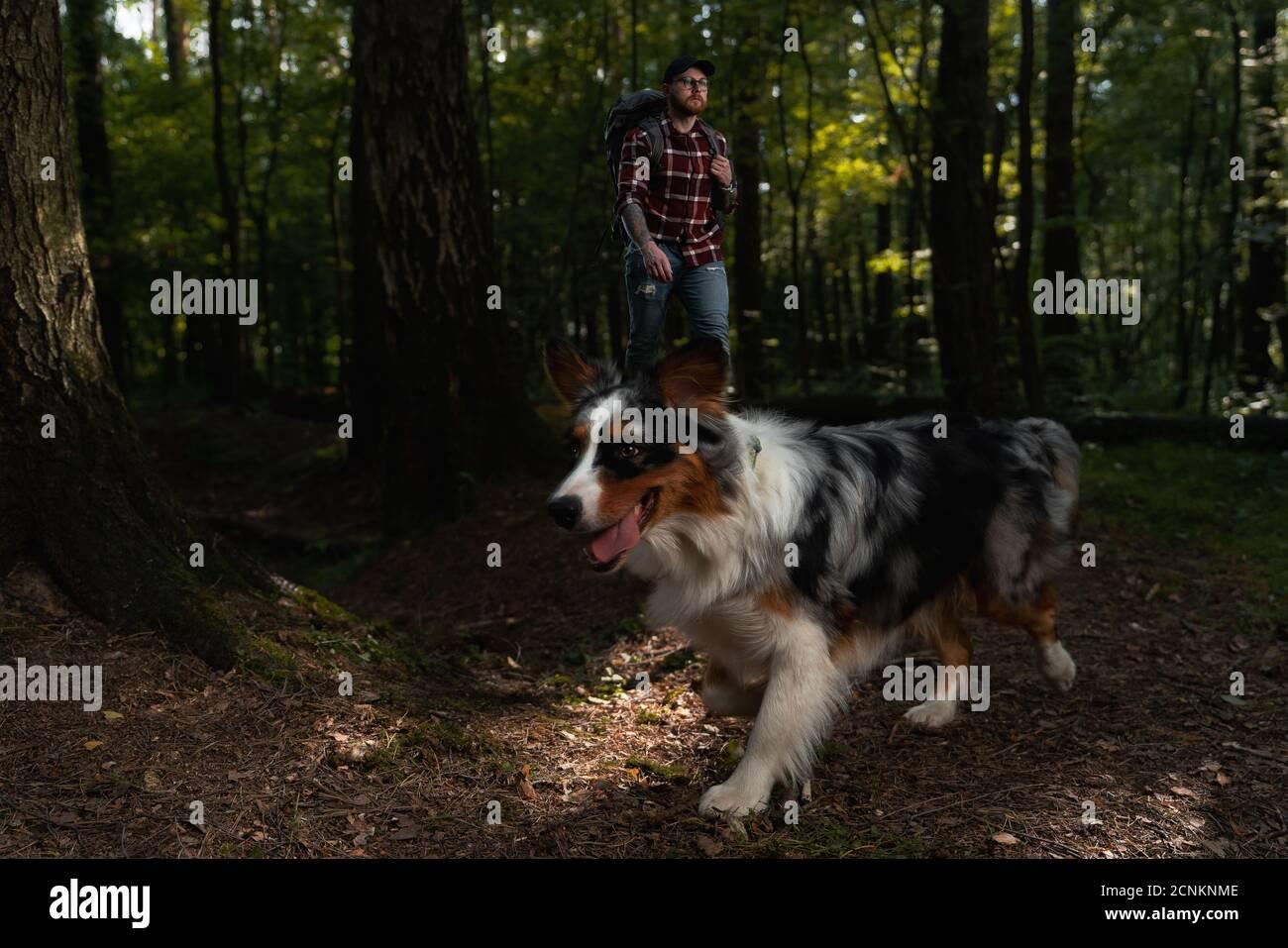 Chien australien avec Hiker Backpacker Man se promener et faire des randonnées dans la forêt. Style de vie actif avec les animaux Banque D'Images