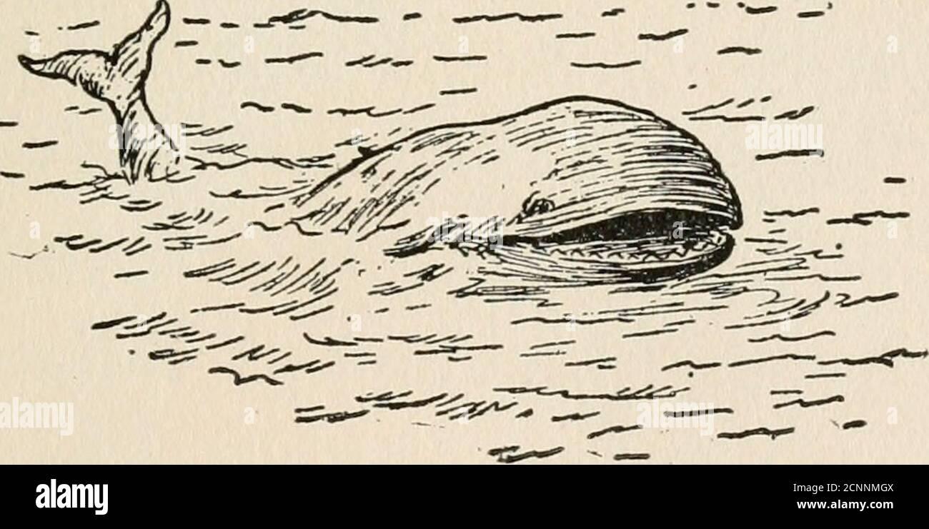 . Les aventures de Peter Peterkin . Un petit matin, un petit coup d'œil sur PETERKIN ET LA BALEINE. UNE BALEINE! Oui, c'était une grosse baleine noire et affamée ! Et il se rapprochait de plus en plus du bateau tire-lait de Peterkins chaque fois qu'il cligne des yeux. Peterkin pouvait voir sa queue fourchue maintenant et ses grands côtés sombres. Une fois qu'il a disparu complètement sous la mousse, et quand il est remonté, il était si près que Peterkinsaw ses yeux laids et une rangée blanche de dents dentelées.quand il a flashé sa queue et les ailettes, il y a eu un grand roulement de l'eau, Et le Pumperkin roulerait et rock sofierely qu'il a presque déversé son Banque D'Images