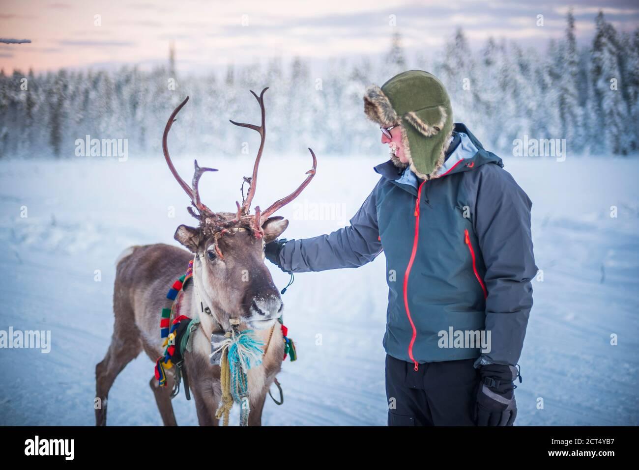 Personne pétant un renne à Noël en hiver dans le cercle arctique de Laponie, en Finlande Banque D'Images