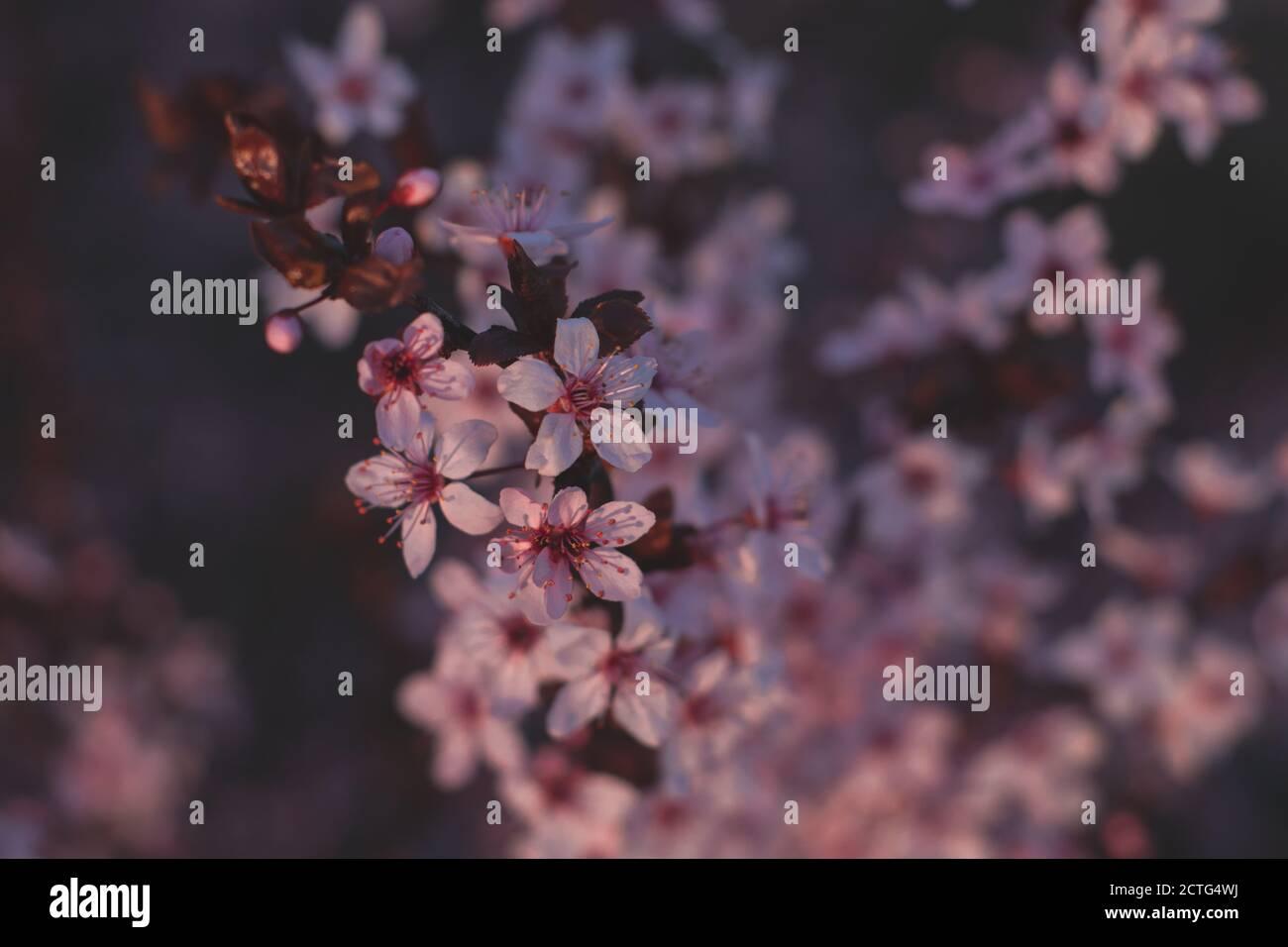Fleurs de printemps, fleurs, nature Banque D'Images