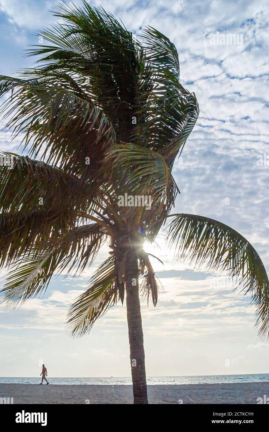 Florida Miami Beach Atlantic Ocean Shore, Palm Tree beachcomber Walking, American Americans, Banque D'Images