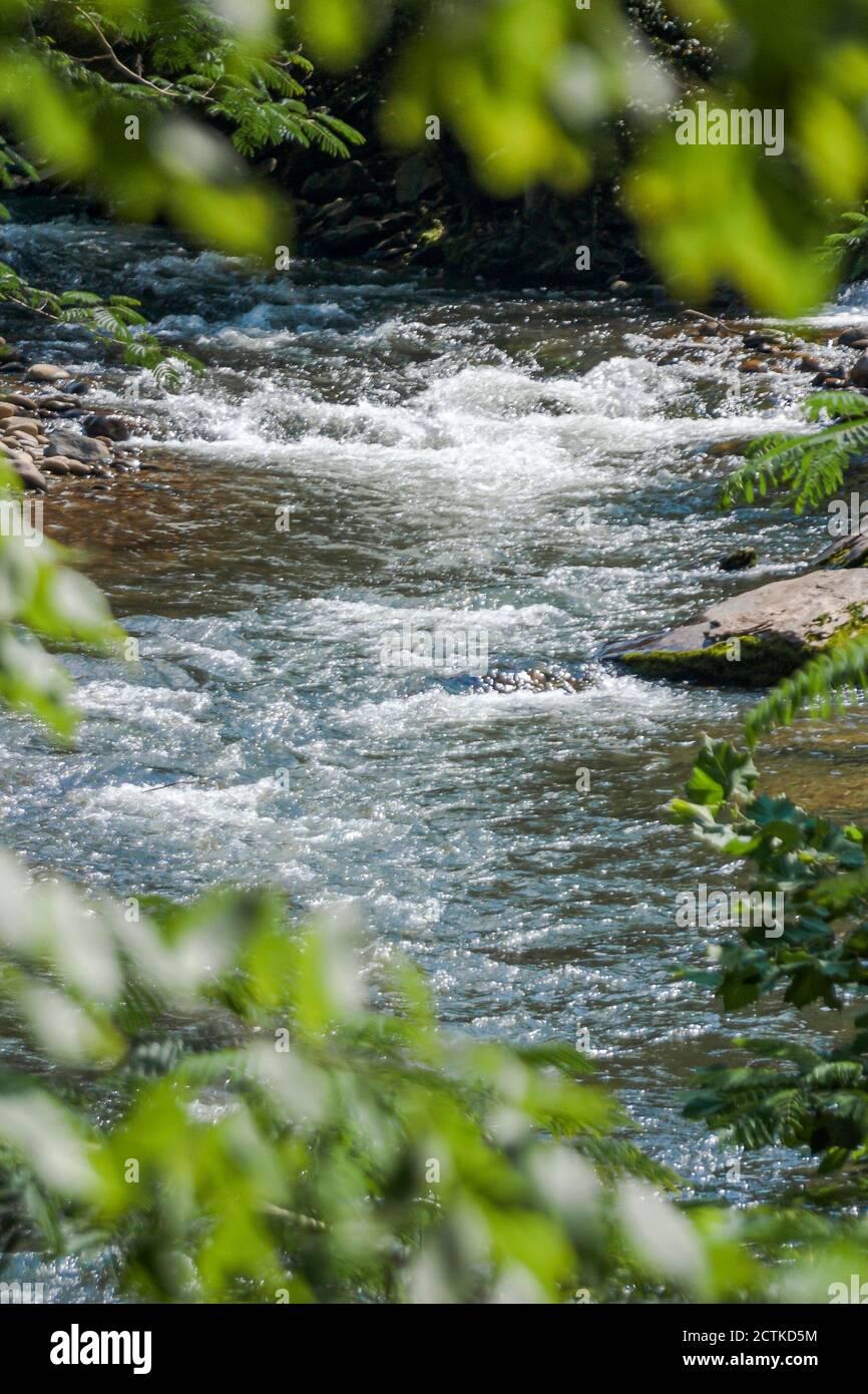 Tennessee Great Smoky Mountains National Park, nature paysage naturel eau Whitewater creek rivière rochers, Américains, Banque D'Images