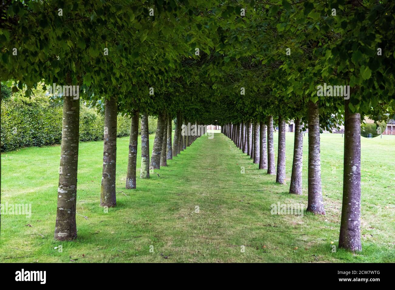 Rangée d'arbres Houghton Hall North Norfolk, Angleterre Banque D'Images