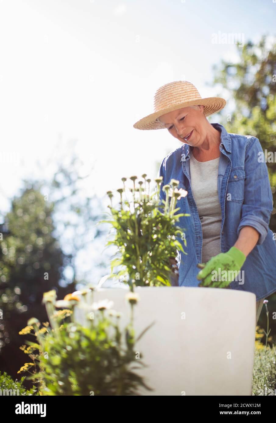 Femme senior dans le jardinage de chapeau de paille dans le jardin ensoleillé d'été Banque D'Images