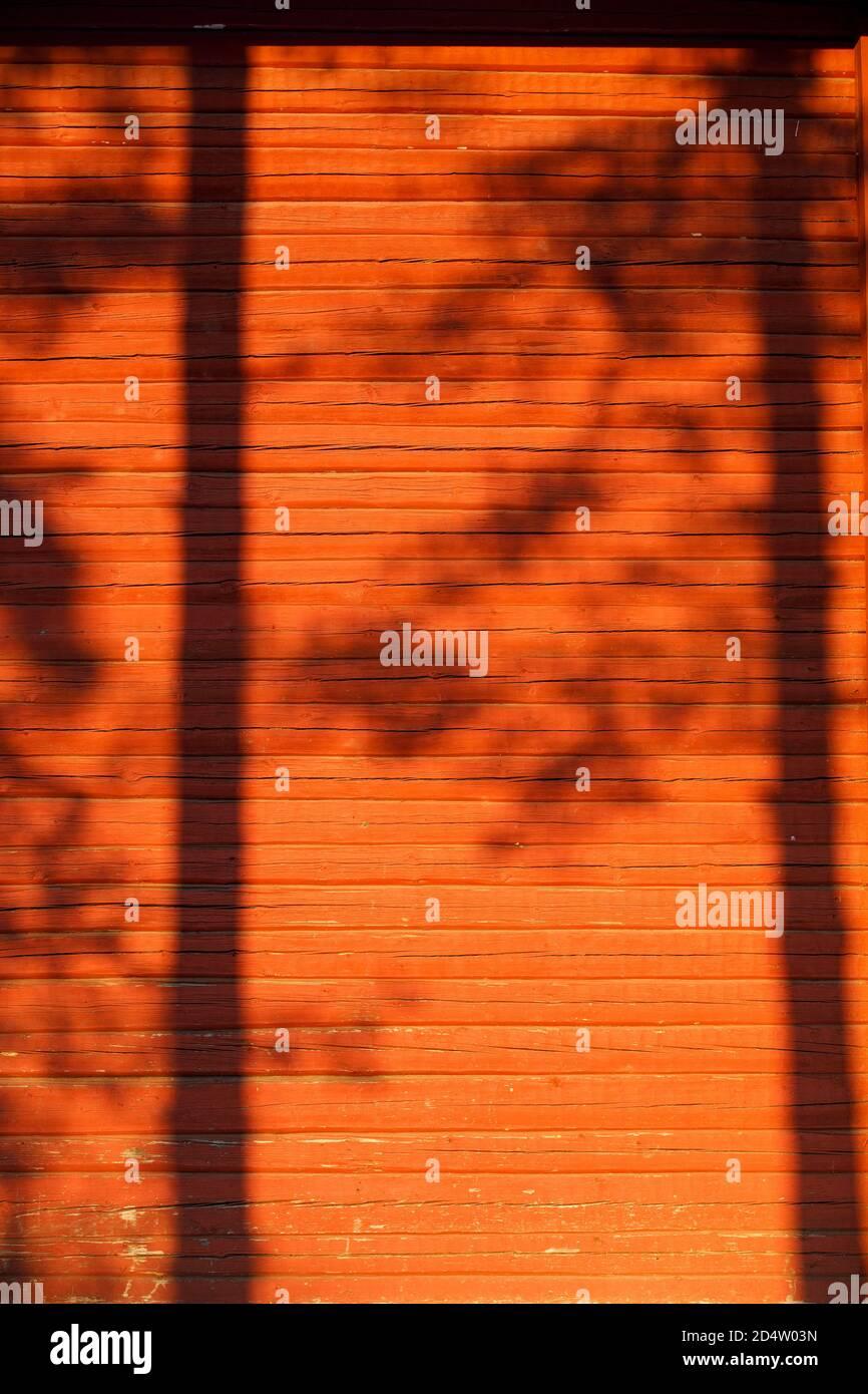 Ombres d'arbres sur le mur en bois, peint avec de la peinture ocre rouge , Finlande Banque D'Images