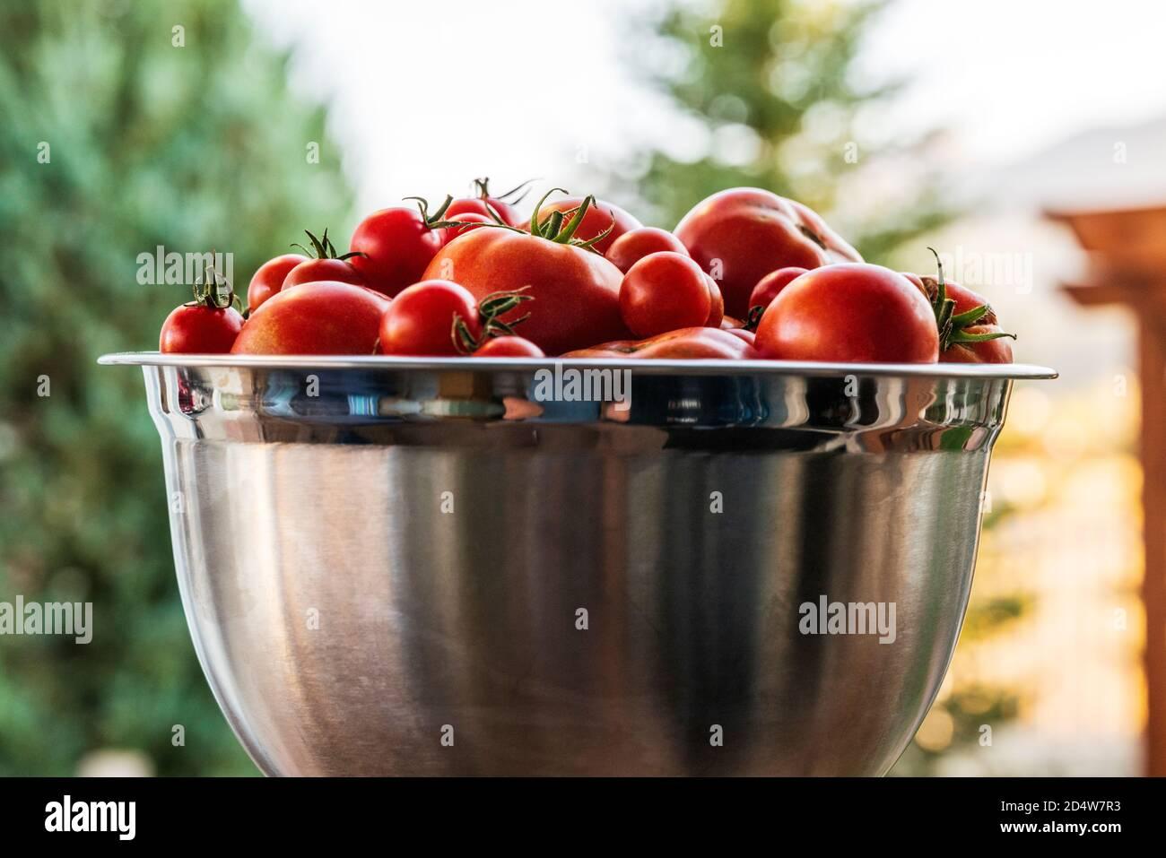 Tomates et poivrons fraîchement cueillis dans le jardin ; Salida ; Colorado ; États-Unis Banque D'Images