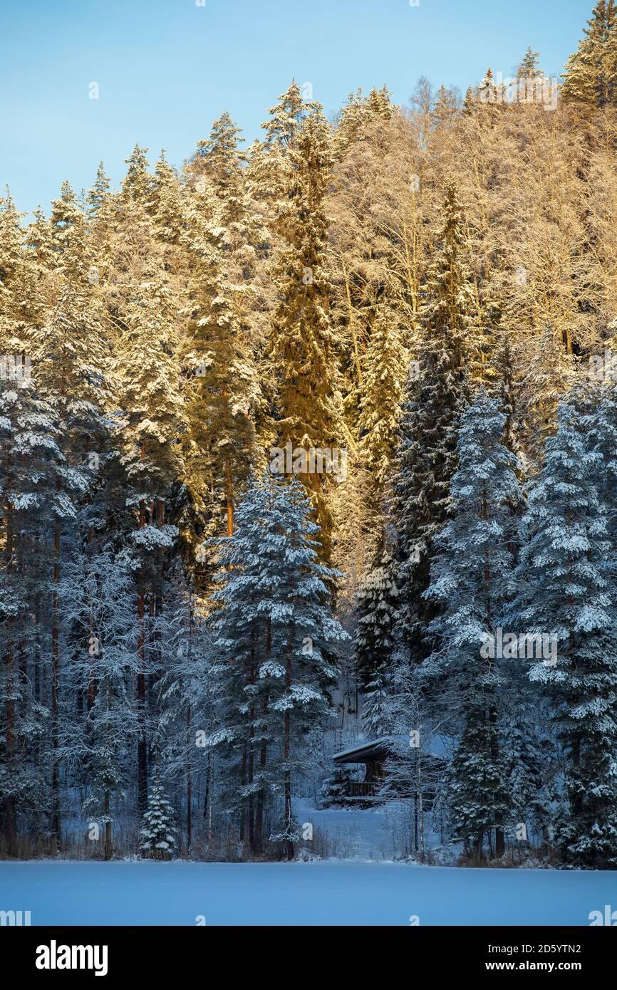 Petite hutte de sauna en bois dans la forêt au bord d'un lac gelé à Winter , Finlande Banque D'Images