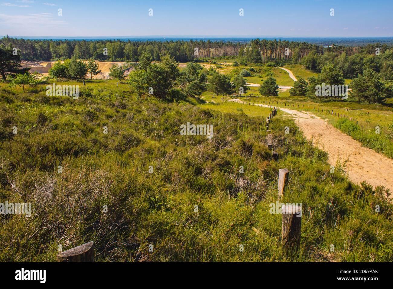 Parc naturel de Wistinghauser Senne près d'Oerlinghausen. C'est une zone de conservation de la nature située dans la forêt de Teutoburg, Rhénanie du Nord Westphalie, Allemagne Banque D'Images