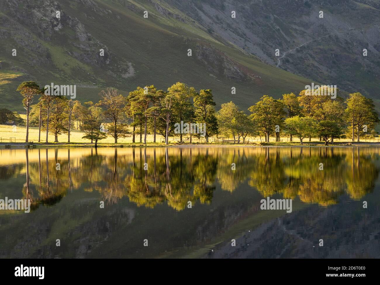 Été réflexions tôt le matin sur Buttermere dans le Lake District, Cumbria Angleterre Royaume-Uni Banque D'Images