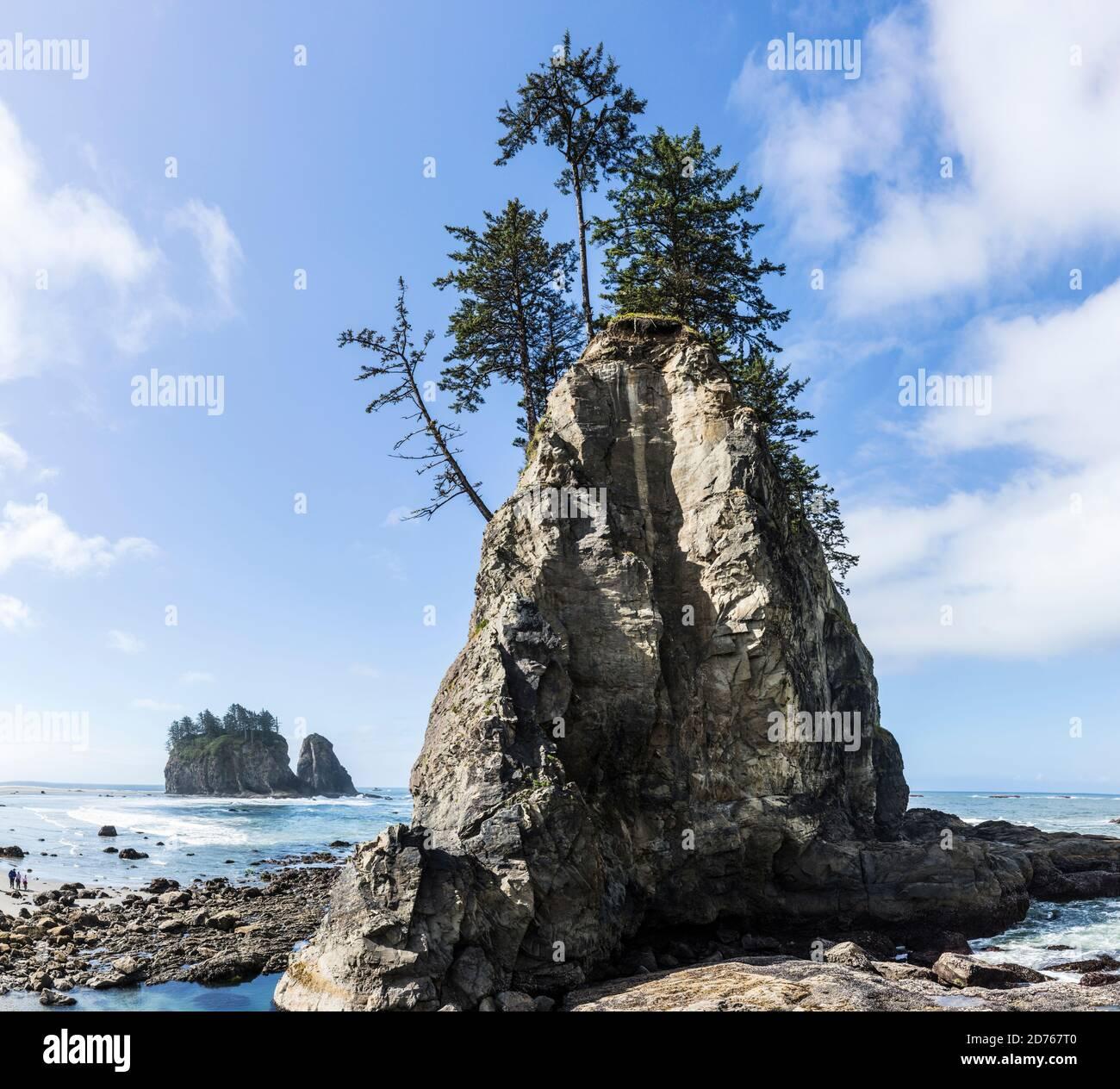 Piles de la mer au large de 2nd Beach, Olympic Coast National Marine Sanctuary / National Park, Washington, Etats-Unis. Banque D'Images