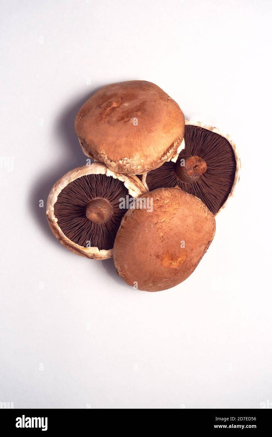 Vue en hauteur des champignons frais sur fond blanc Banque D'Images