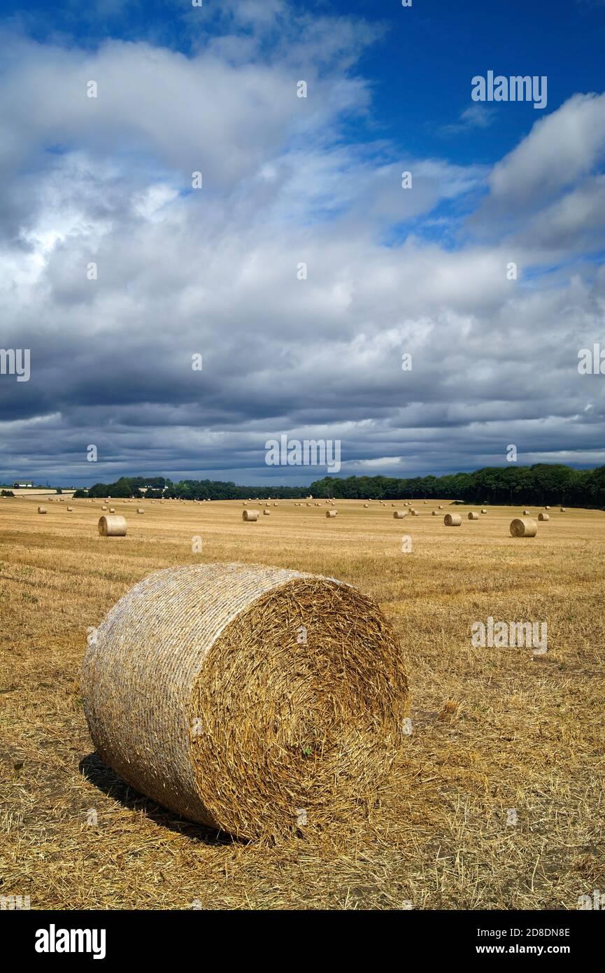 Royaume-Uni, Yorkshire du Sud, Doncaster, balles de foin de fût dans le champ près de Clayton Banque D'Images