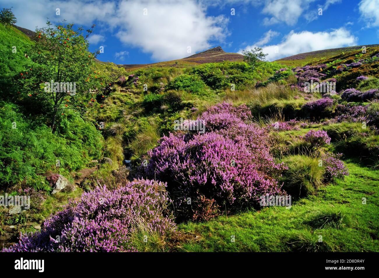 Royaume-Uni,Derbyshire,Peak District,Edale,Golden Clough regardant vers Ringing Roger Banque D'Images