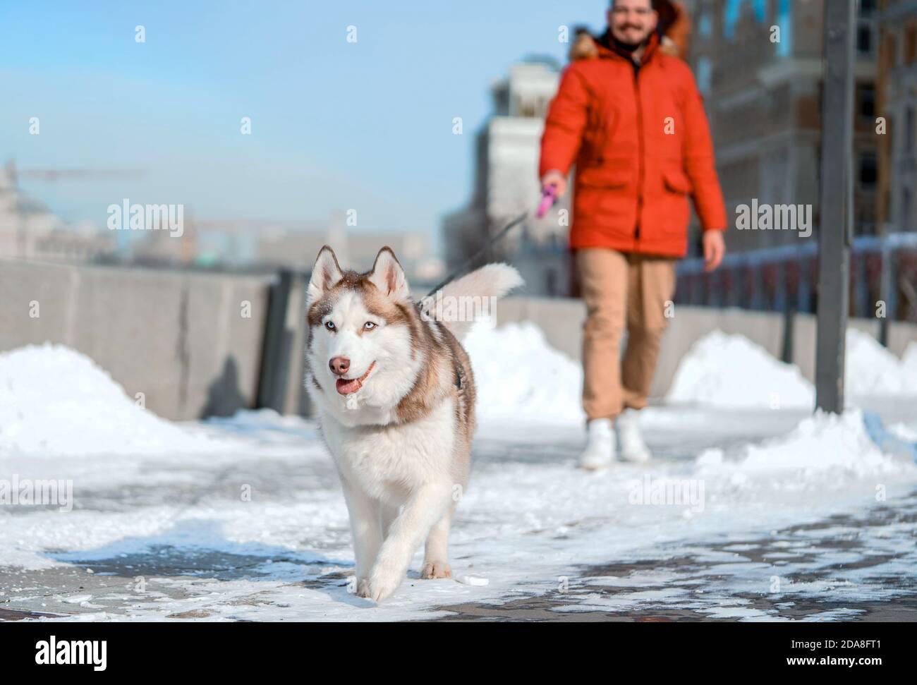 Un homme souriant et un chien Husky de Sibérie heureux marchant dans un parc contemporain moderne le jour de l'hiver. Amour et amitié humains et animaux. Banque D'Images