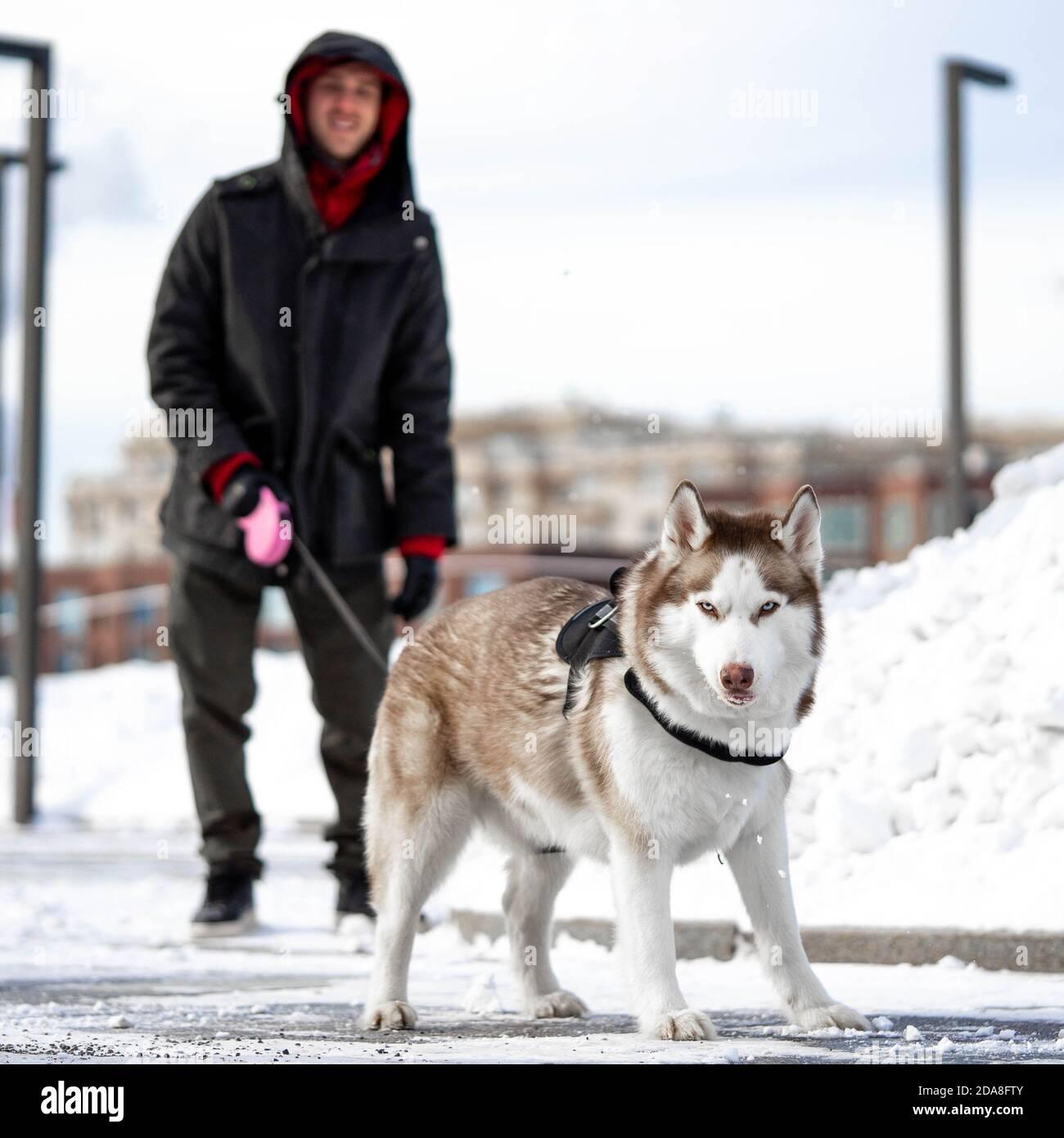 L'homme et le chien Husky sérieux de Sibérie avec une randonnée dans un parc contemporain moderne le jour de l'hiver. L'amour et l'amitié humains et animaux. Banque D'Images