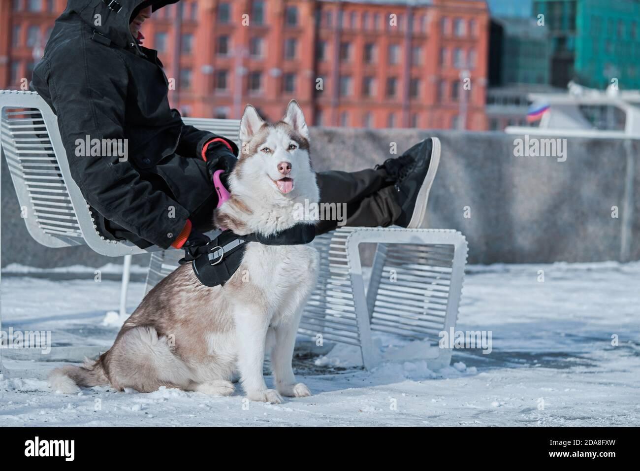 L'homme et le mignon chien Husky sibérien assis sur des chaises au parc à la Sunny Winter Day. Concept de l'amitié entre l'animal et l'homme. Banque D'Images