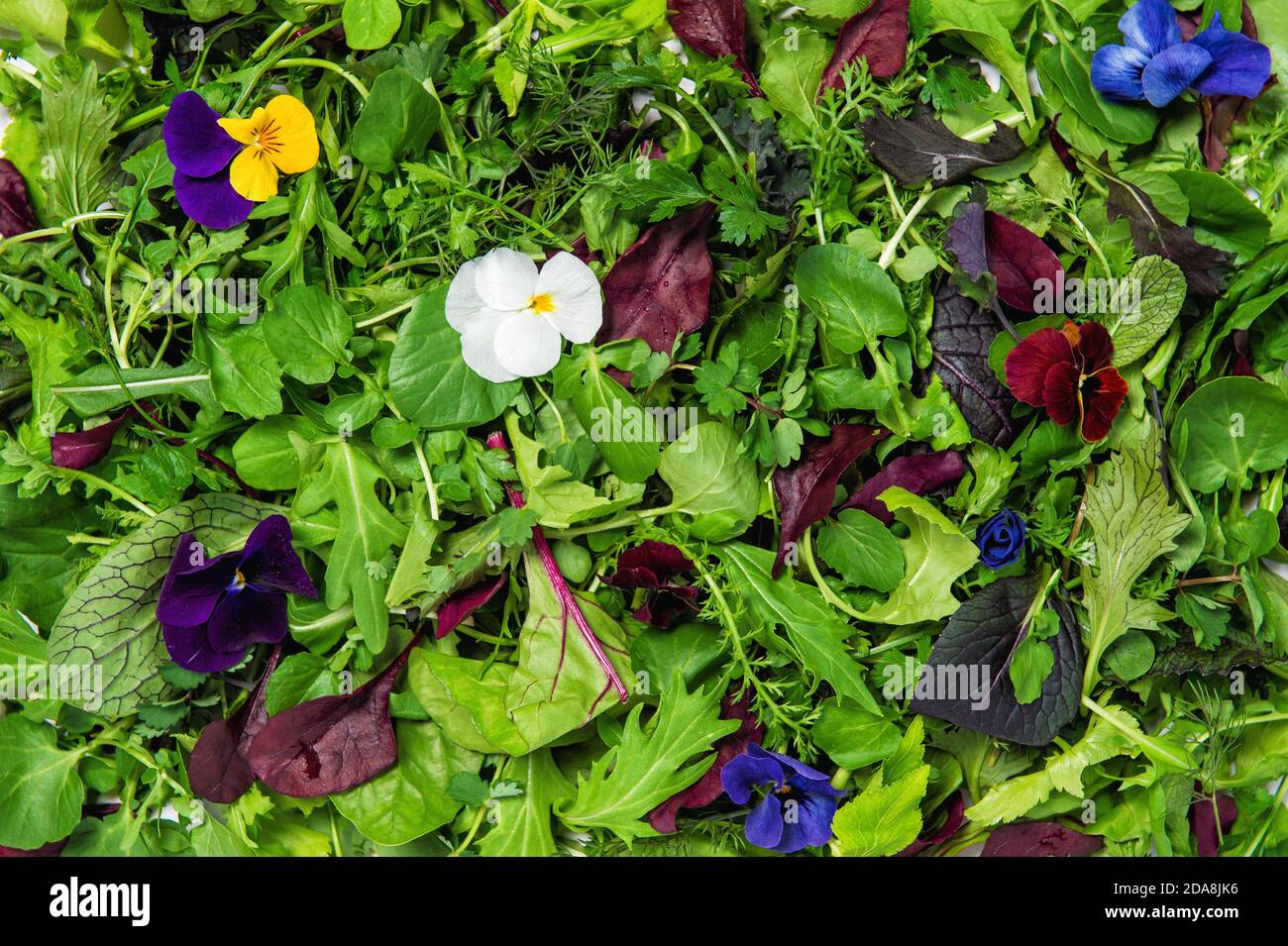 Salade de feuilles aux fleurs comestibles. Une alimentation saine. La nourriture Banque D'Images