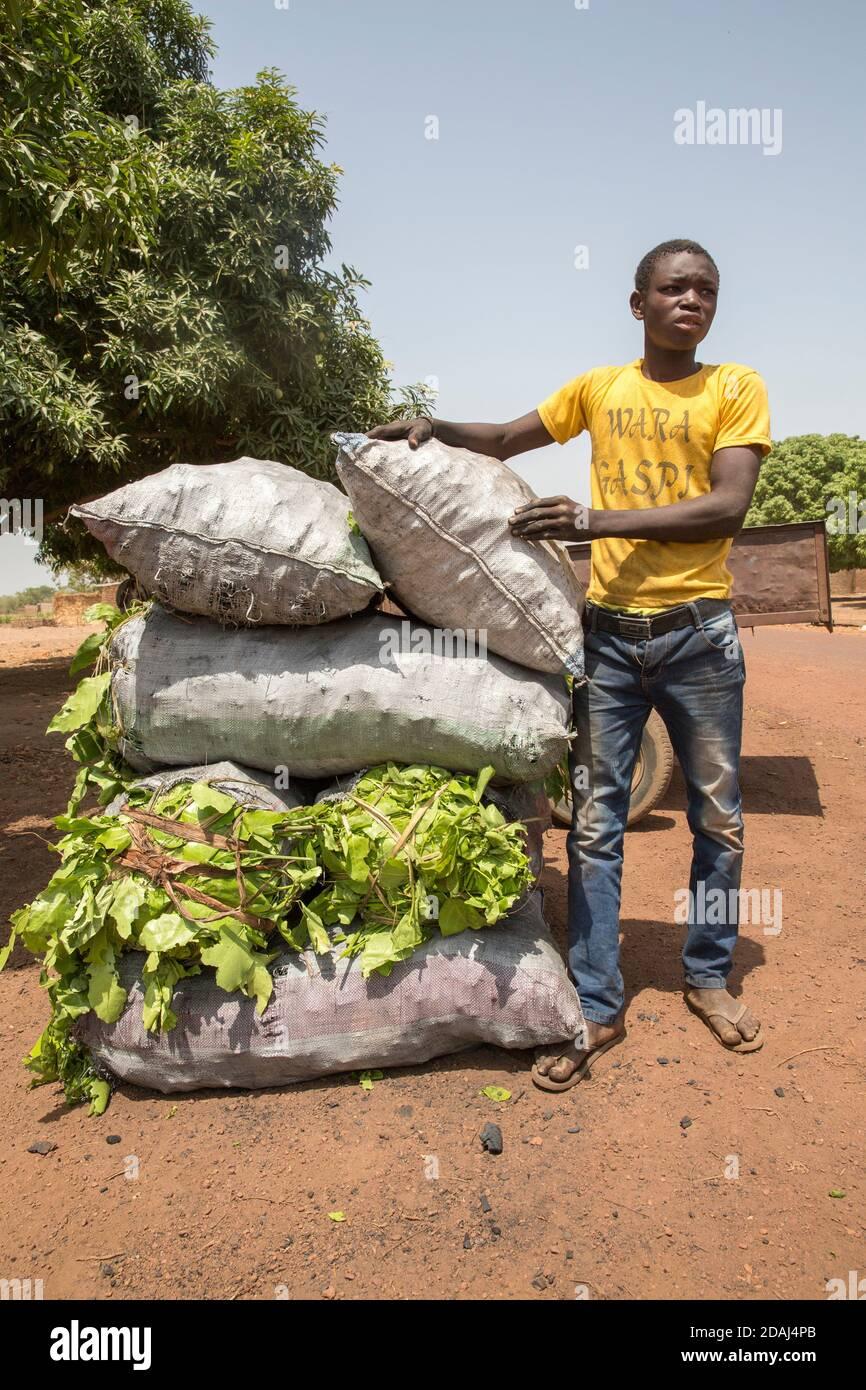 Selingue, Mali, le 25 avril 2015; Sayo Keita, 17 ans, vendeur de charbon de bois, travaille avec son frère. Il a quitté l'école récemment, a obtenu la 9e année. Banque D'Images