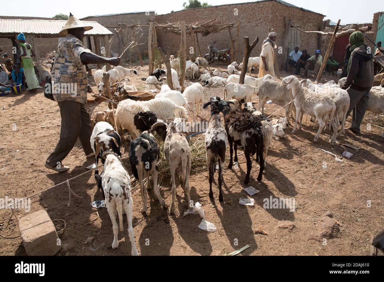 Selingue, Mali, 25 avril 2015; vendeurs de moutons. Ces commerçants ont acheté leurs animaux à Ouelessebougou, à 60 km, mais aujourd'hui n'a pas été un bon jour pour la vente. Banque D'Images
