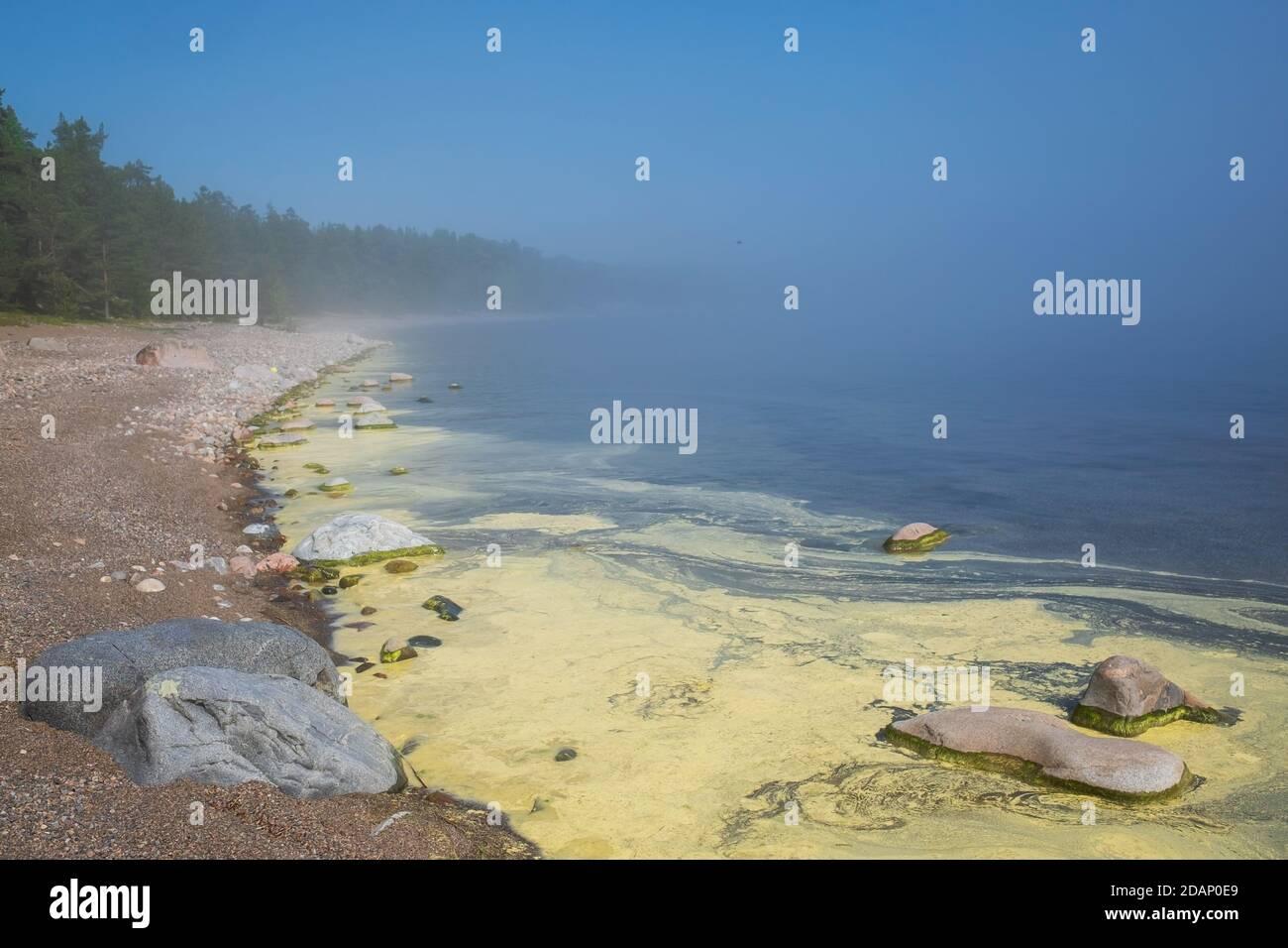 Les algues fleurissent le long du rivage d'un étang. Banque D'Images