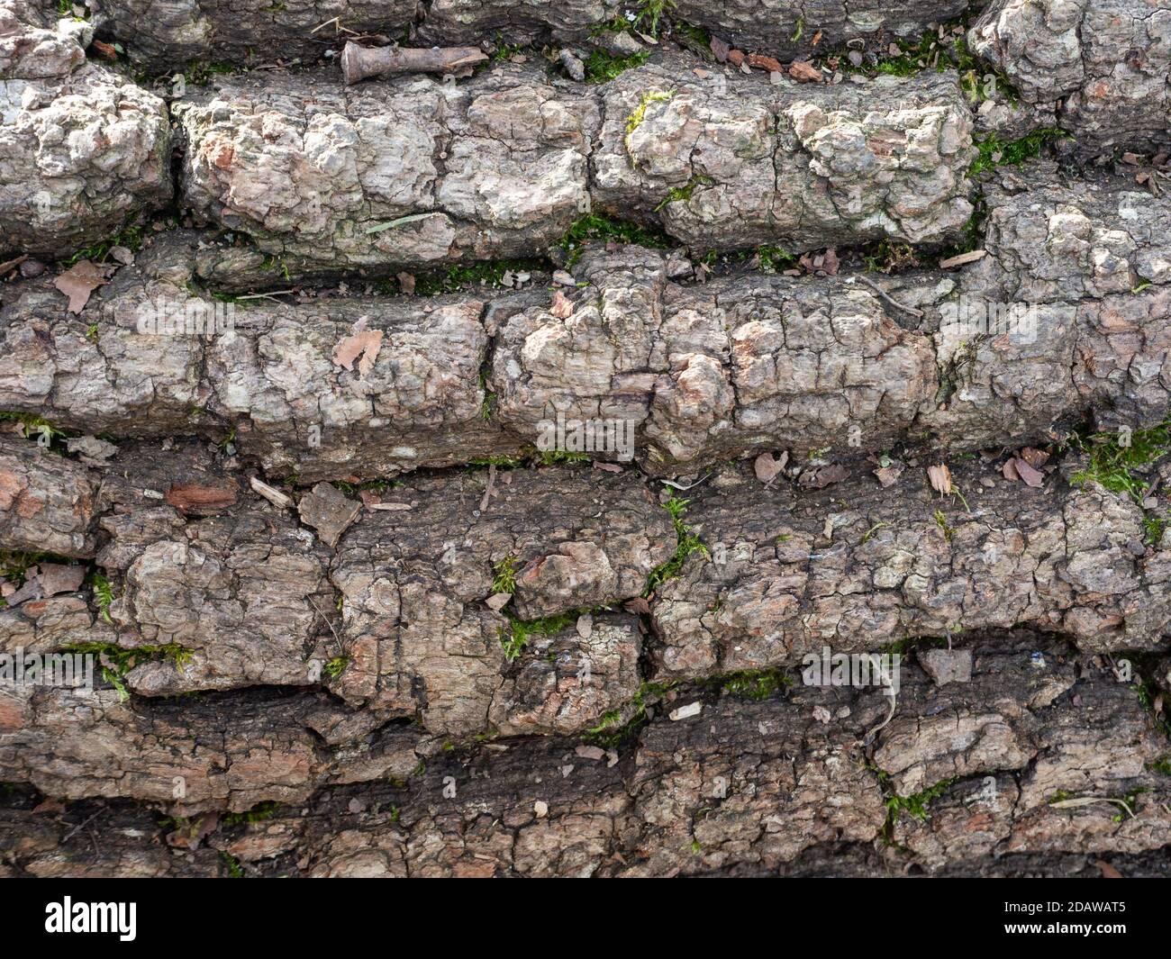 Texture de l'ancien tronc d'arbre dans la nature Banque D'Images