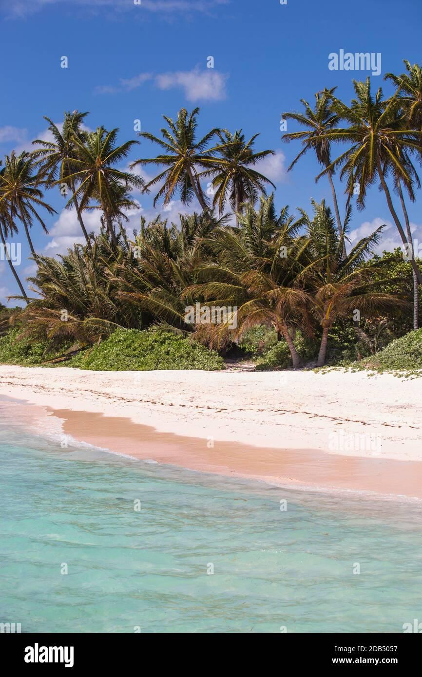 République dominicaine, Punta Cana, Playa Blanca Banque D'Images
