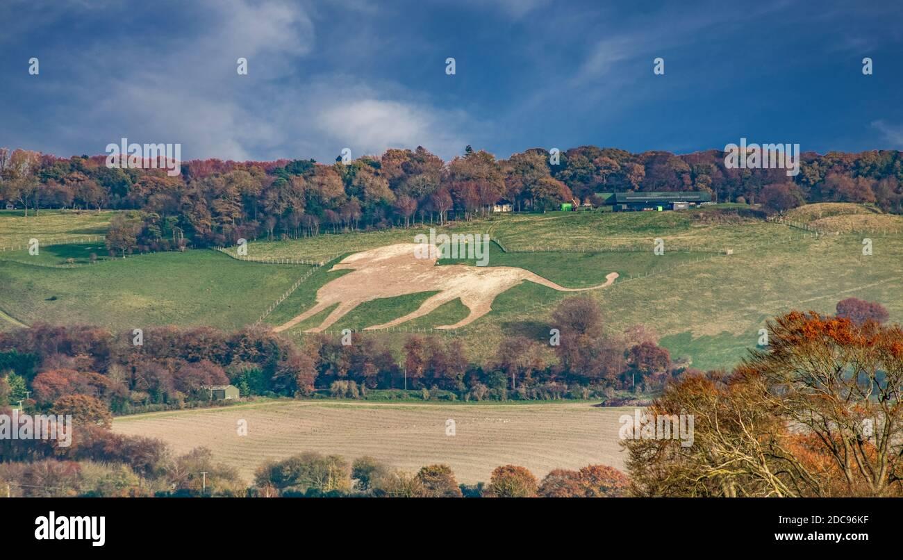 Whipsnade White lion Dunstable Downs Bedfordshire créé en 1933 Angleterre Banque D'Images