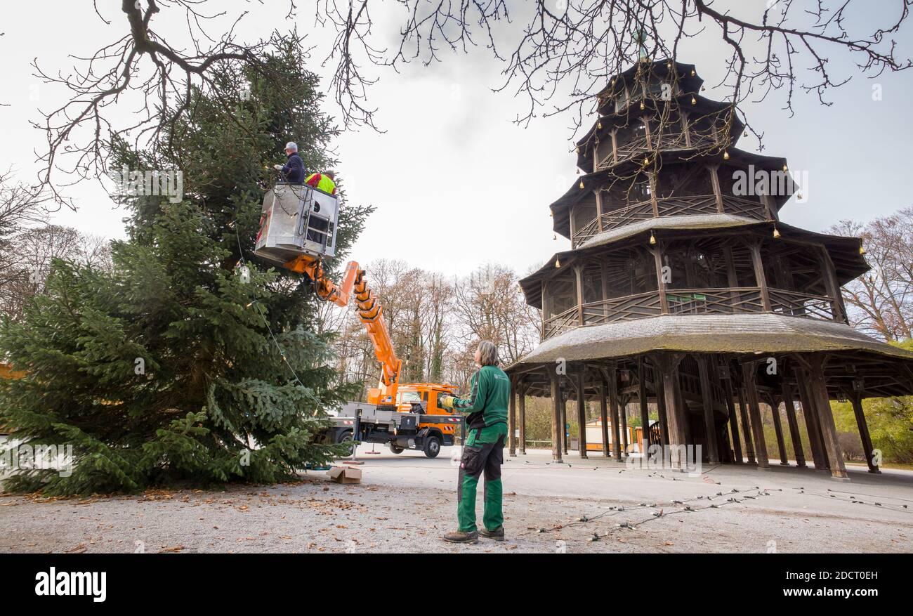 Munich, Allemagne. 23 novembre 2020. Un sapin de Noël est installé devant la tour chinoise et décoré de lumières. Sur la place autour de la tour, le marché de Noël est traditionnellement tenu. Credit: Peter Kneffel/dpa/Alay Live News Banque D'Images