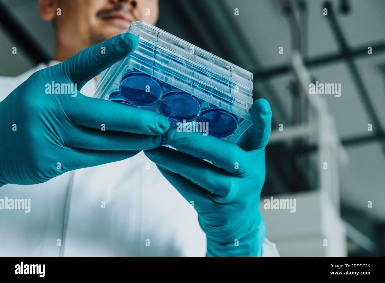 Scientifique tenant le plateau de boîtes de Pétri en se tenant au laboratoire Banque D'Images