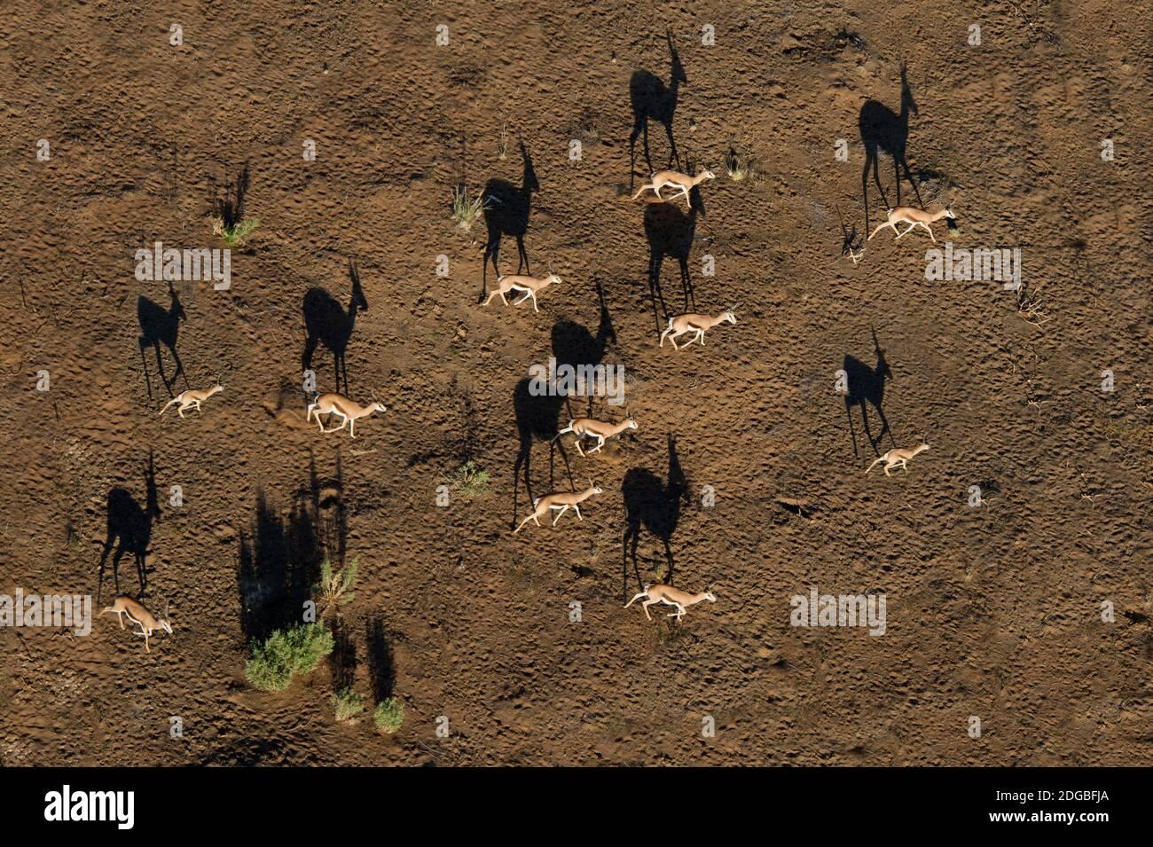 Vue aérienne des cerfs, Sossusvlei, désert du Namib, parc national Namib-Naukluft, Namibie Banque D'Images