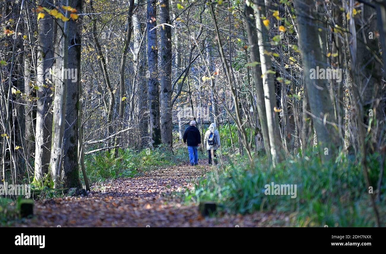 Photos pour une caractéristique sur Wellesley Woodland, Aldershot - automne Weekend Walks caractéristique. Woodland Trails Off Fleet Road, jeudi 12 novembre 2020. Banque D'Images