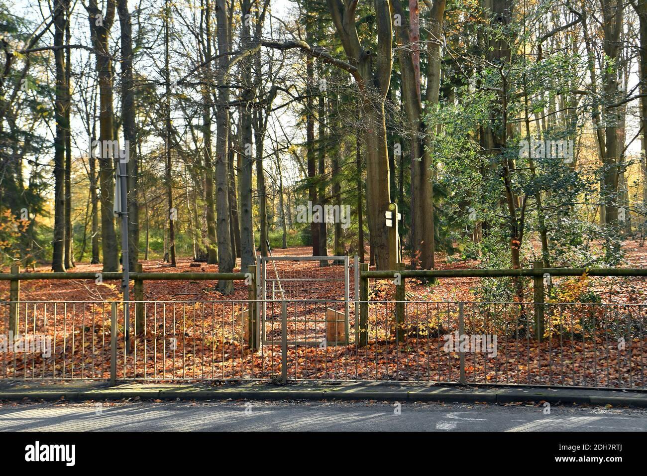Photos pour une caractéristique sur Wellesley Woodland, Aldershot - automne Weekend Walks caractéristique. Point de passage sur Clubhouse Road, jeudi 12 novembre 2020. Banque D'Images