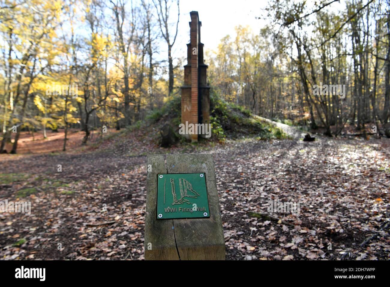 Photos pour une caractéristique sur Wellesley Woodland, Aldershot - automne Weekend Walks caractéristique. Sentiers forestiers. Un des nombreux postes de frottement en laiton pour enfants, jeudi 12 novembre 2020. Banque D'Images