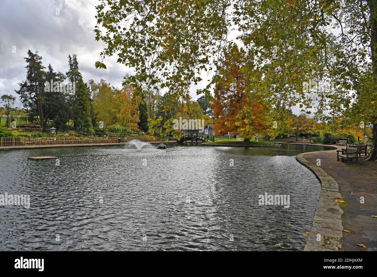 Dans le parc Stoke, Guildford - couleurs automnales, les travaux continuent de restaurer et d'améliorer les jardins orientaux. Guildford, Surrey. Photo prise le 20 octobre 2020 Banque D'Images