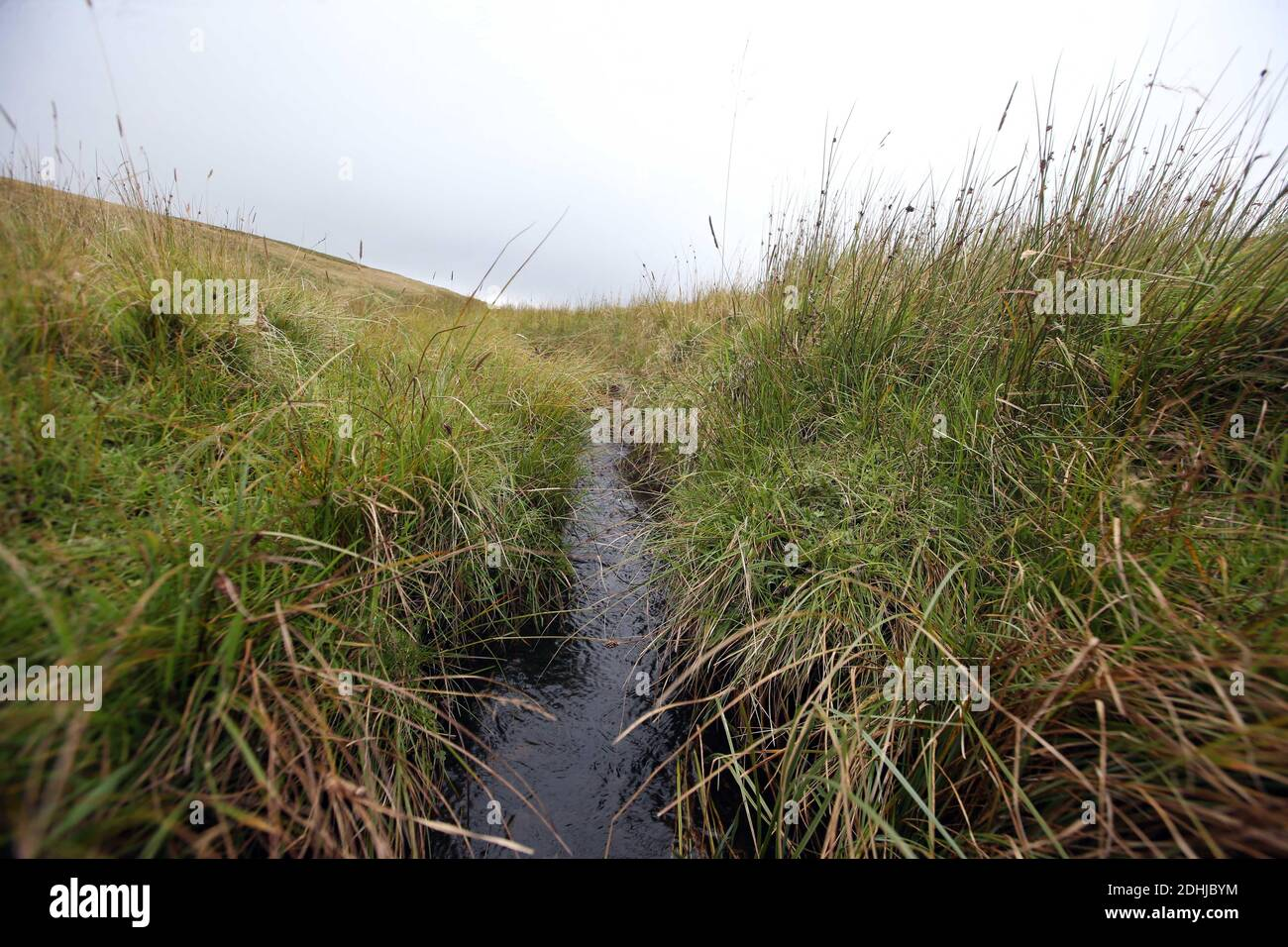 La source de la rivière Coquet haut dans les collines près du fort romain à Chew Green.Samedi 3 octobre 2020. Banque D'Images