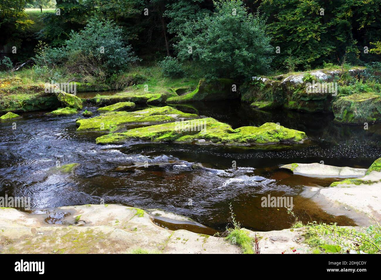 The River Coquet. The moss covered rocks at Thrum Mill just east of Rothbury.Saturday 3rd October 2020. Banque D'Images