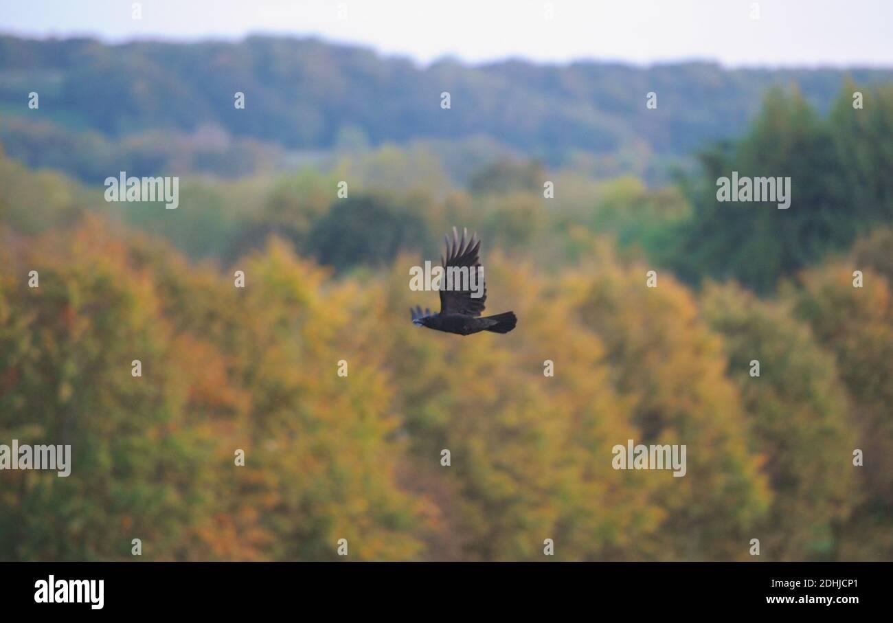 Couleur d'automne à Pelaw Woods près des rives de la rivière Wear dans la ville de Durham. Photo prise le 16 octobre 2020 Banque D'Images